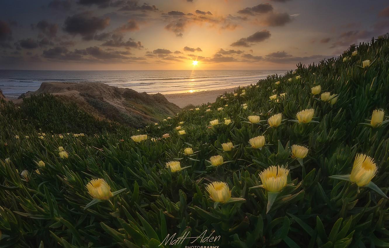 Wallpaper beach, flowers, spring, CA, USA, the Pacific ocean