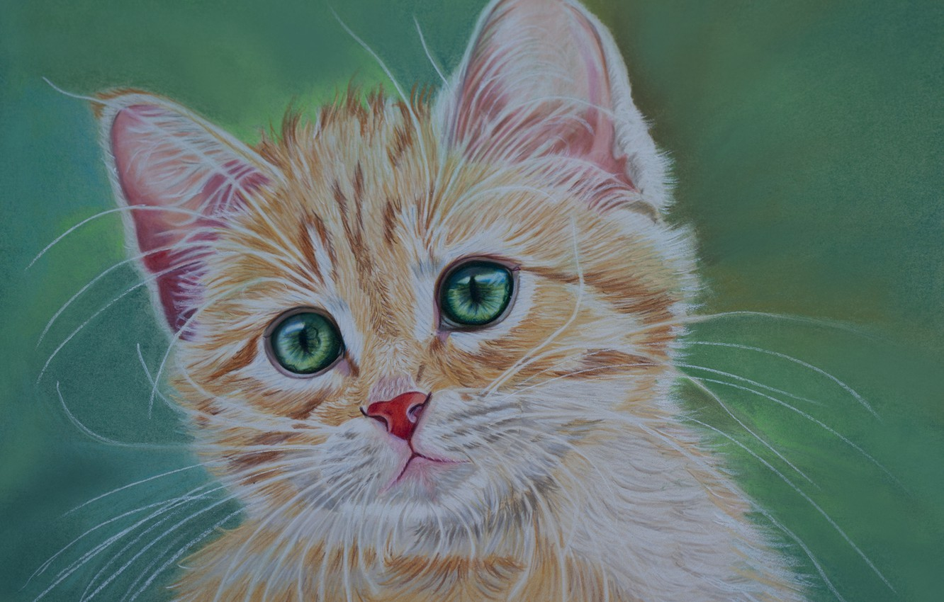 Photo wallpaper eyes, look, red, kitty, green, green background