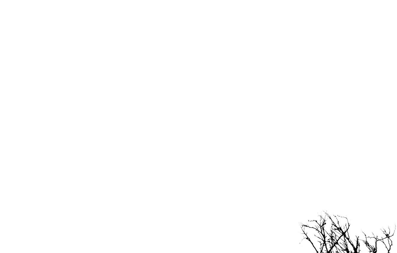 Photo wallpaper mood, branch, Minimalism, black and white