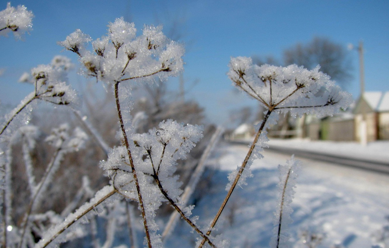 Photo wallpaper winter, snow, plants, winter, snow