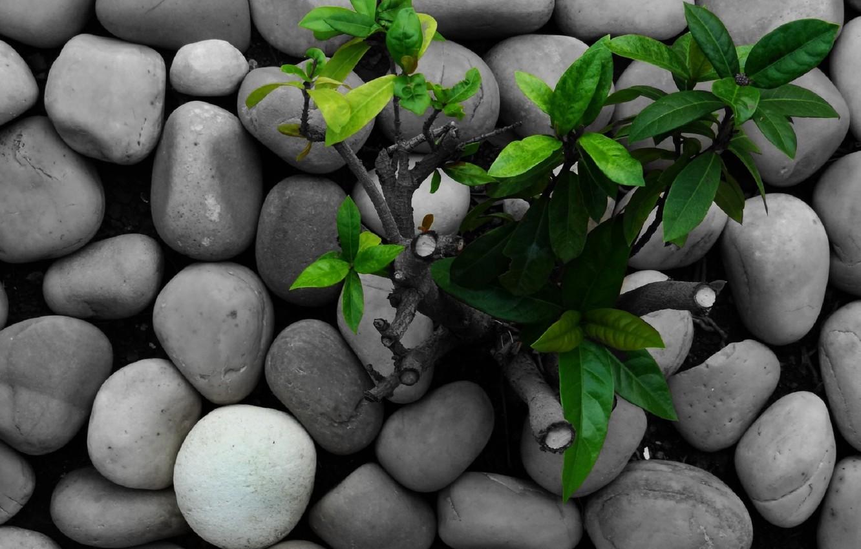 Photo wallpaper grass, nature, green, stones, green, plants, grass, nature, rocks, plant