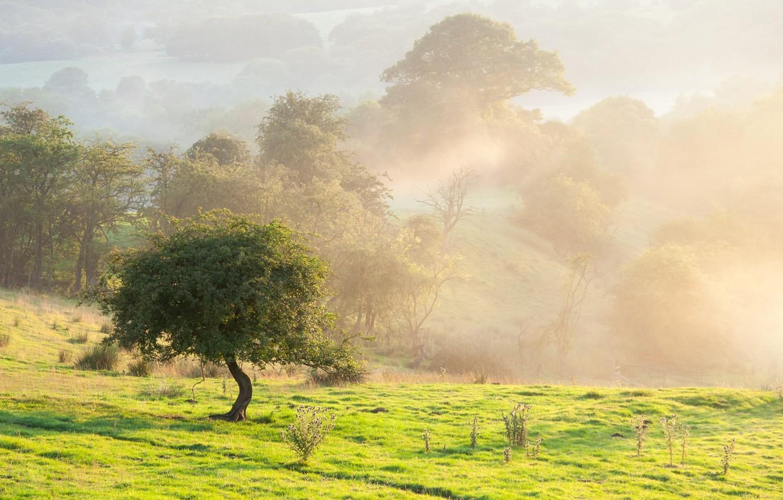 Photo wallpaper field, summer, landscape, nature, fog, tree, beauty, morning