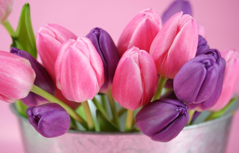 Photo wallpaper purple, flowers, pink, tulips, buds