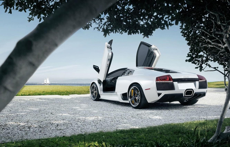 Photo wallpaper Lamborghini, Sky, Grass, Sun, Murcielago, White, Supercar, Trees, Rear, LP640-4