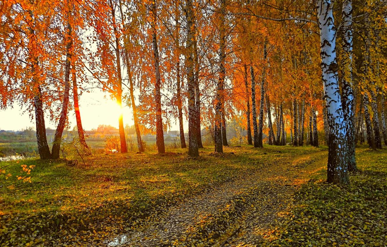 Photo wallpaper road, autumn, the sun, landscape, sunset, nature, yellow leaves, birch