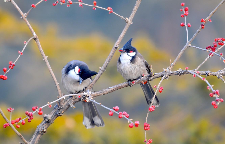 Photo wallpaper birds, branches, berries, tree, China, garden, China, Beijing, Nanhaizi Park