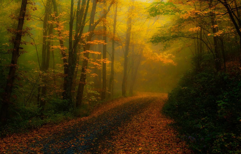 Photo wallpaper road, autumn, forest, trees, nature, fog, foliage, treatment, USA, North Carolina