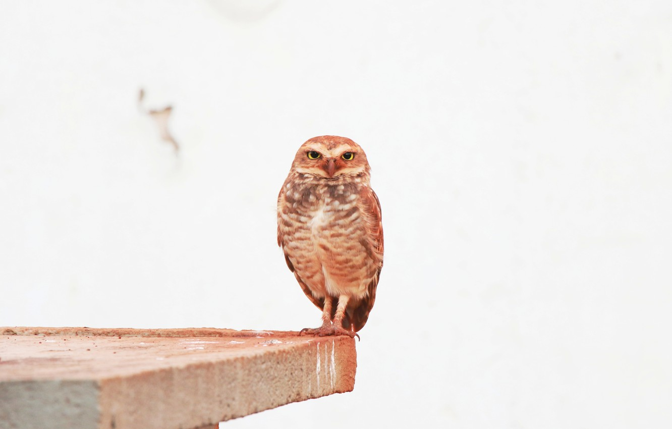 Photo wallpaper eyes, owl, feathers, looks
