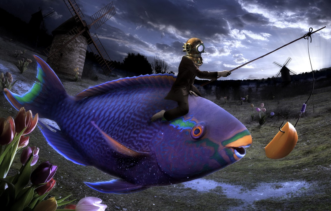 Wallpaper flowers fish humor surreal absurd images for - Surreal screensavers ...