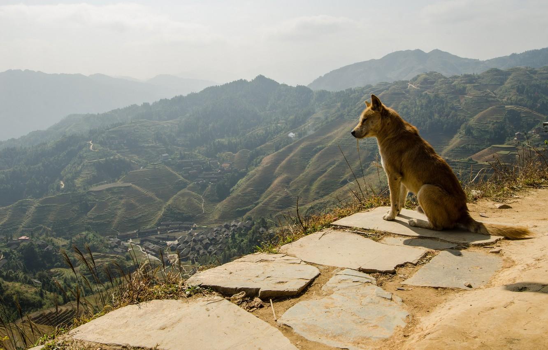 Photo wallpaper nature, each, dog, panorama, dog