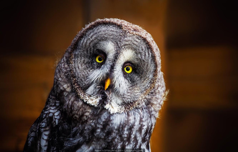 Photo wallpaper owl, owl, bird of prey