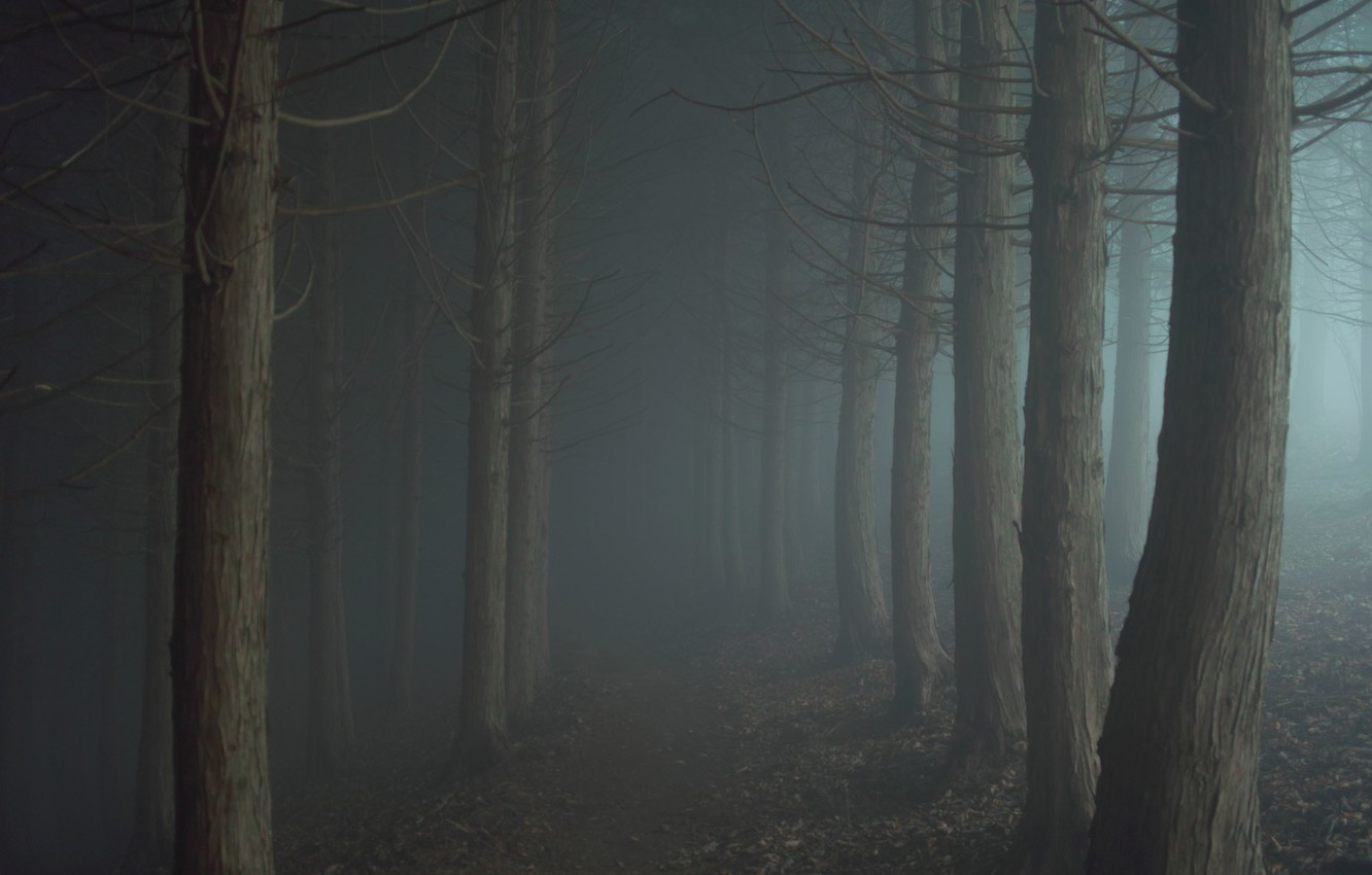 Photo wallpaper road, fog, the darkness, Forest, twilight, path