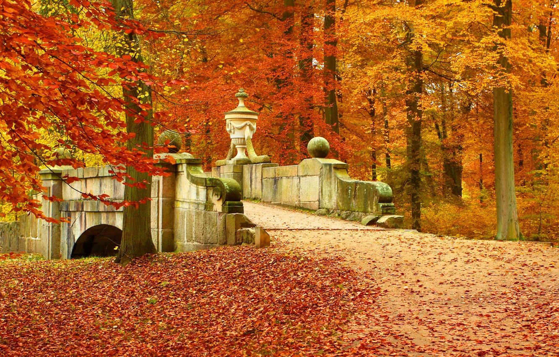 Photo wallpaper autumn, forest, leaves, trees, landscape, bridge, nature