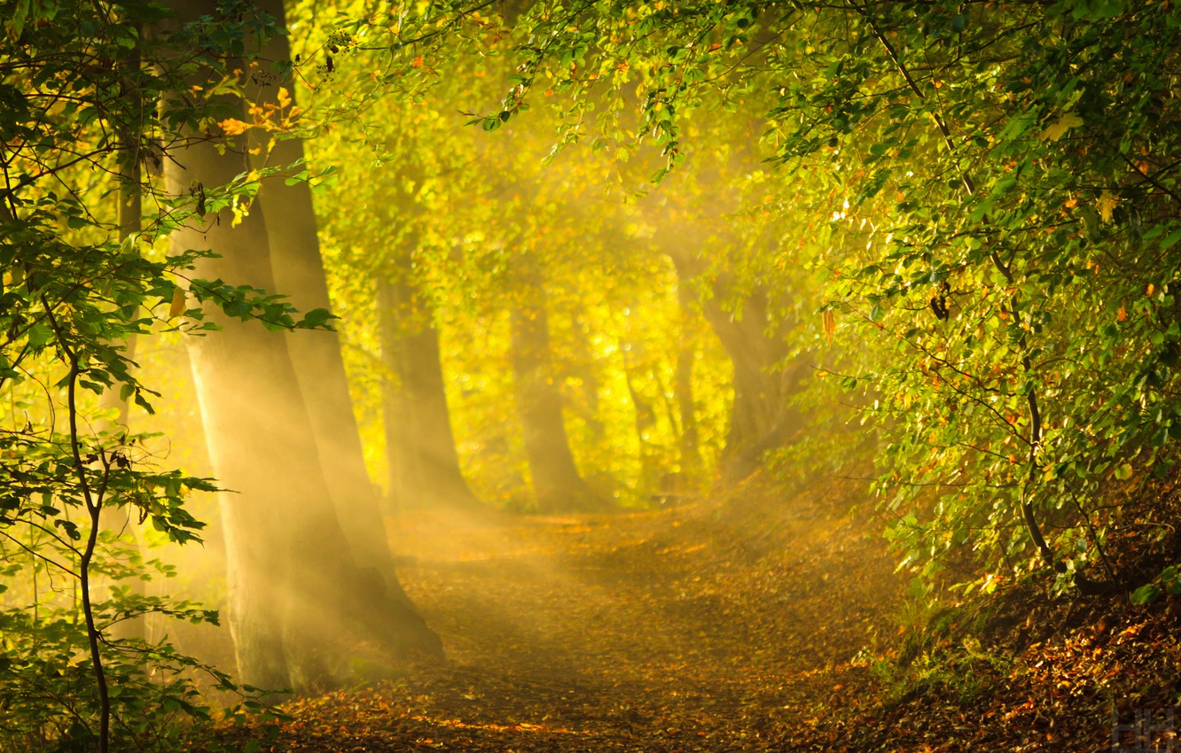 Photo wallpaper forest, the sun, rays, trees, nature, bright light, foliage, morning, forest, nature, sunrise, crepuscular rays, …