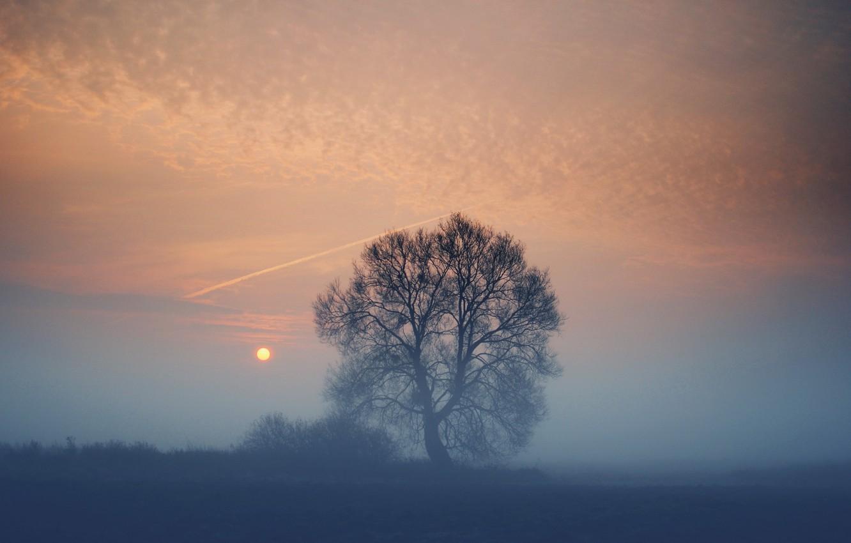 Photo wallpaper field, the sun, sunset, fog, tree, the evening