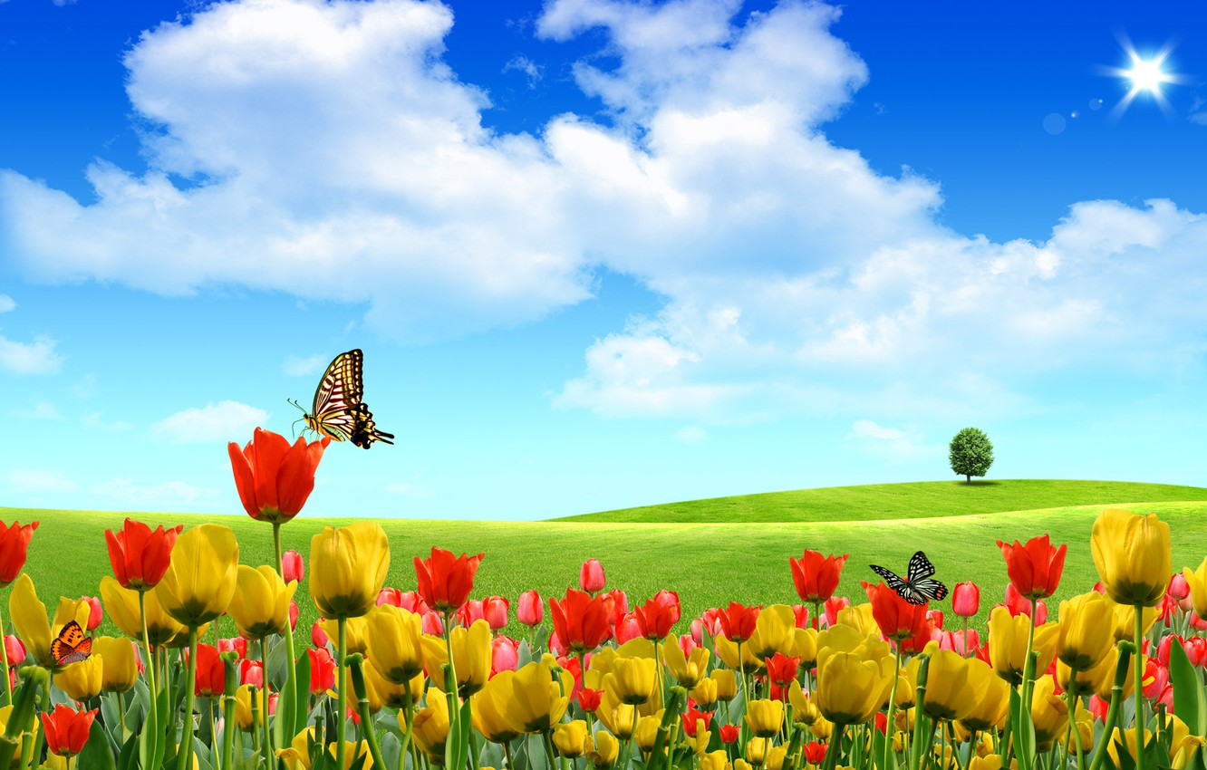 Photo wallpaper summer, the sky, butterfly, flowers, nature, tulips