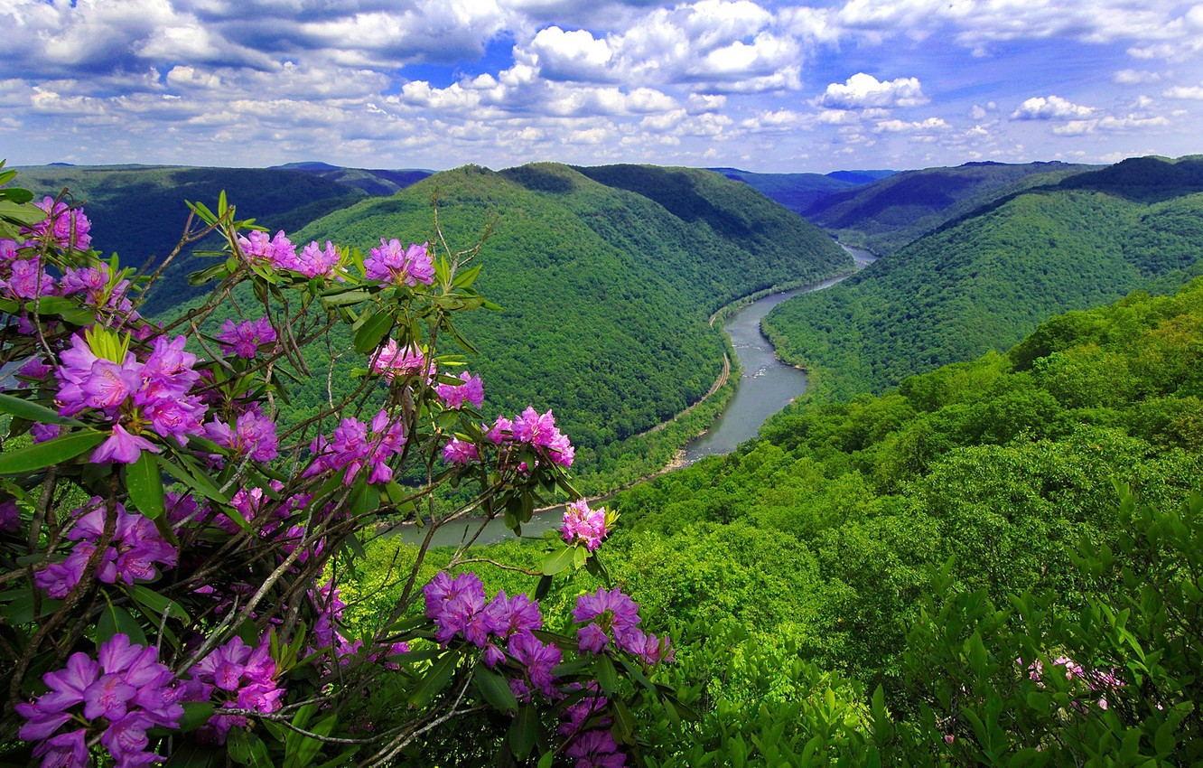 Photo wallpaper flowers, mountains, nature, river