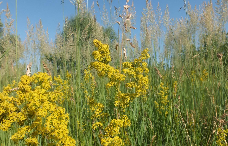 Photo wallpaper flower, summer, grass, nature