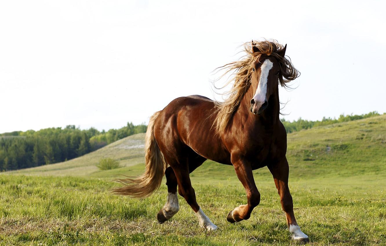 Photo wallpaper nature, horse, horse