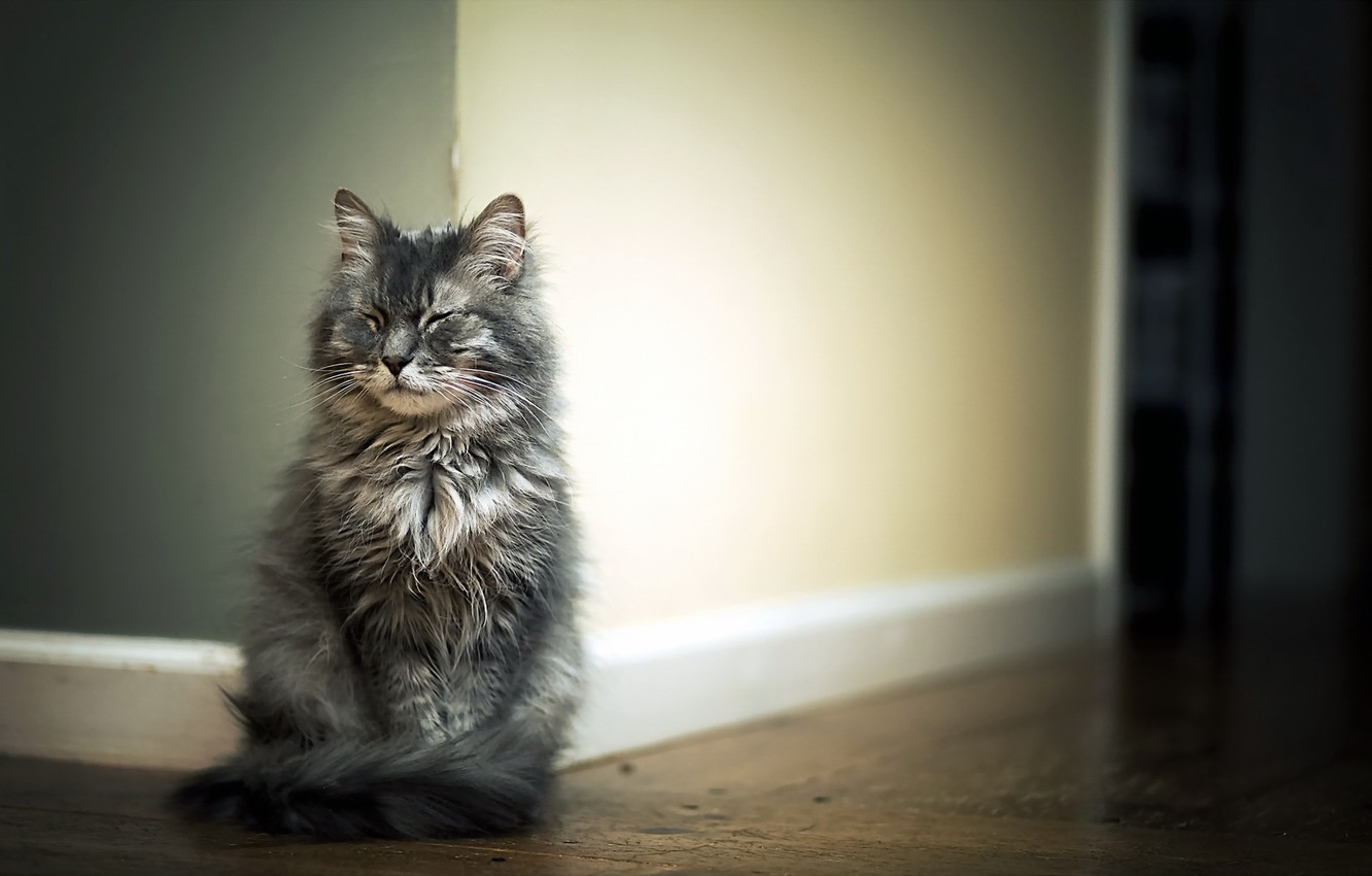 Photo wallpaper cat, house, background