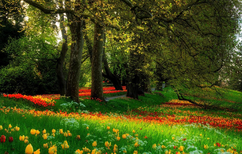 Photo wallpaper grass, trees, flowers, Park, nature.