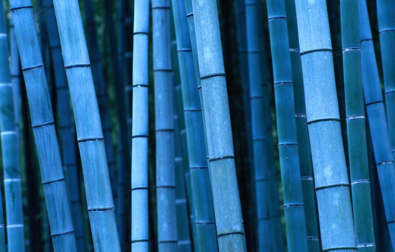 Photo wallpaper bamboo, Japan, Japan, Kinki, Kinky, Kyoto, Bamboo, Kyoto