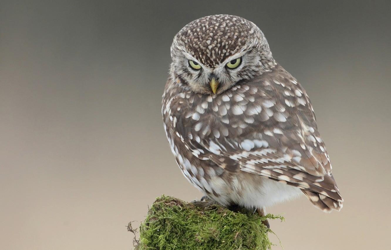 Photo wallpaper look, owl, bird, moss, post