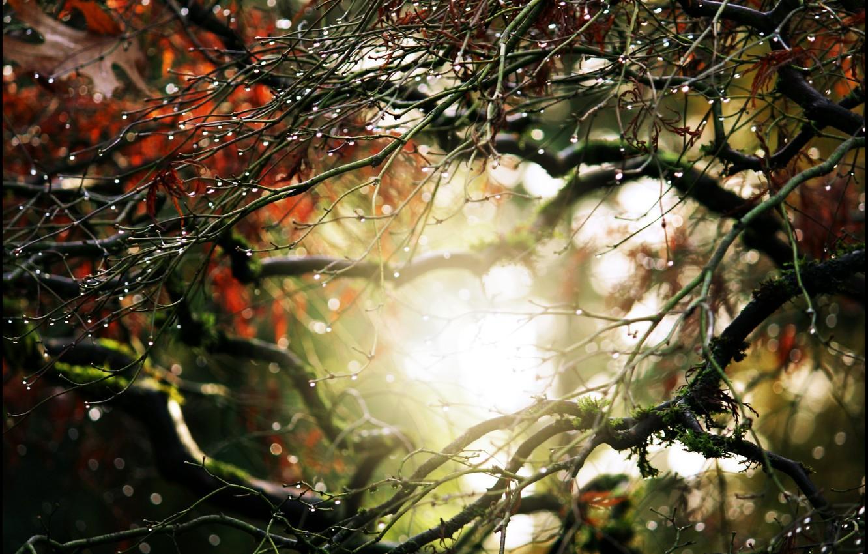 Photo wallpaper leaves, water, drops, macro, green, Rosa, tree, leaf, rain, nature, leaves, autumn