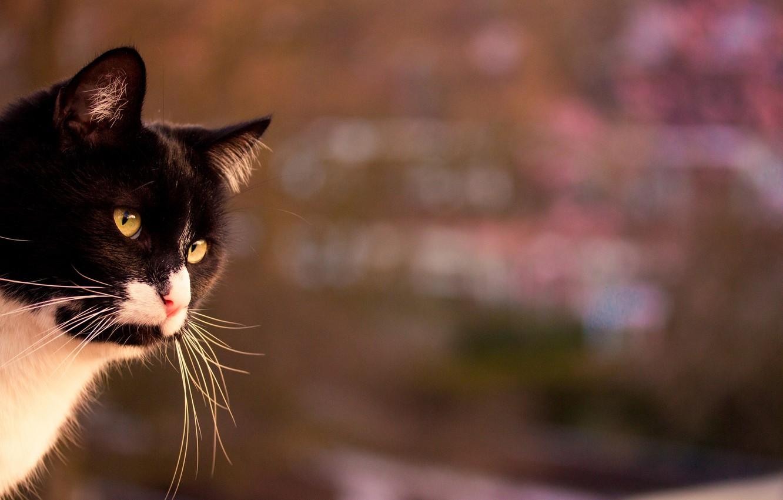 Photo wallpaper cat, mustache, black and white, looks