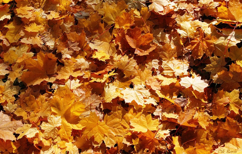 Photo wallpaper leaves, carpet, gold, falling leaves