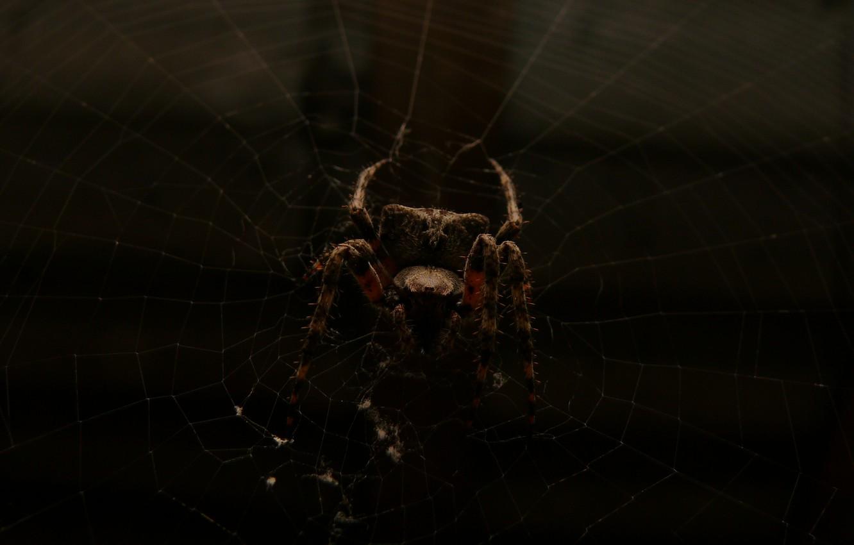 Wallpaper Spider Dark Macro Spider Web Images For Desktop
