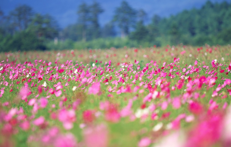 Photo wallpaper summer, flowers, spring