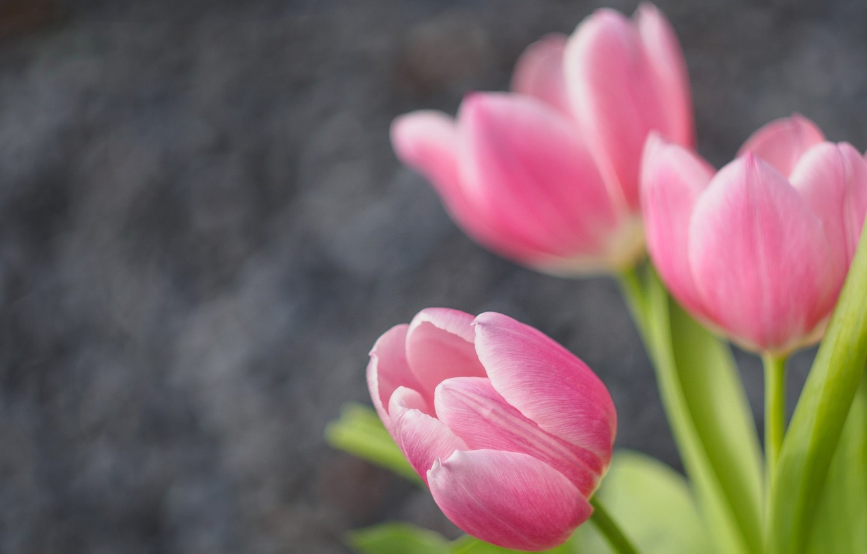 Photo wallpaper tulips, buds, bokeh