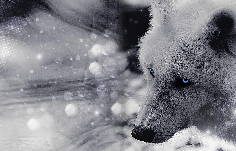 Photo wallpaper eyes, look, face, wolf, wool
