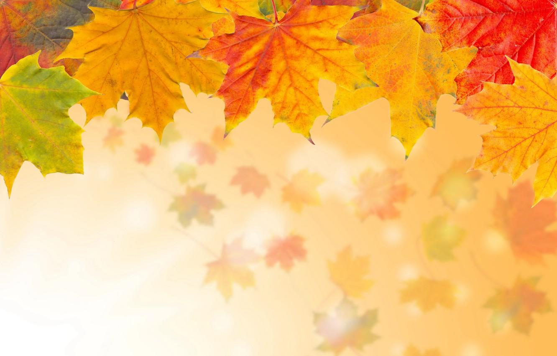 Photo wallpaper autumn, leaves, yellow, maple