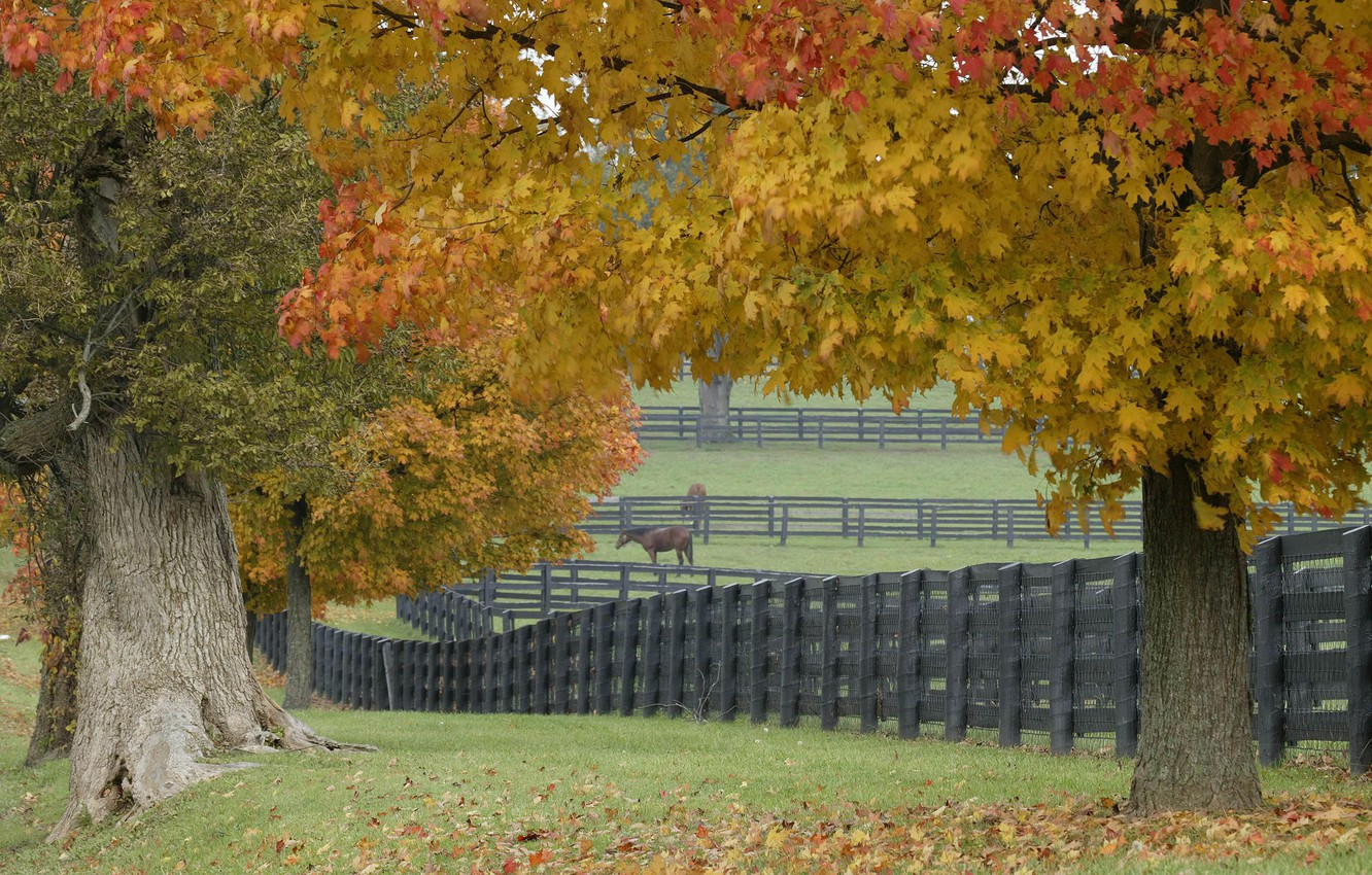 Photo wallpaper grass, leaves, trees, the fence, Horse