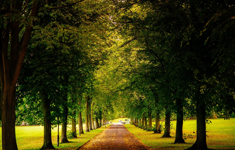 Photo wallpaper road, leaves, trees, Park, England, yellow, green, UK, alley, fallen, Sheffield, Sheffield