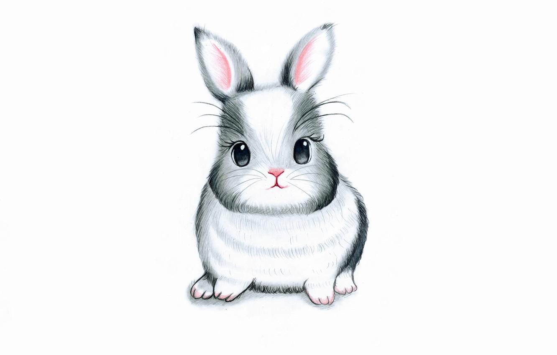 Photo wallpaper hare, rabbit, white background, rabbit, bunny