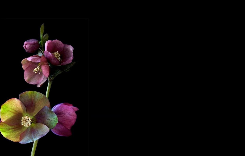 Wallpaper Light Shadow Branch Petals Stem Images For Desktop Section Cvety Download