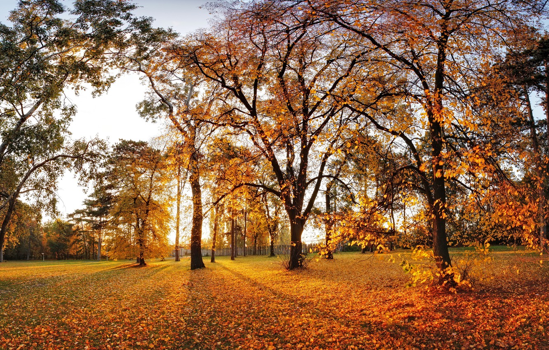 Photo wallpaper autumn, leaves, trees, Park, landscape, nature, park, autumn, leaves, tree
