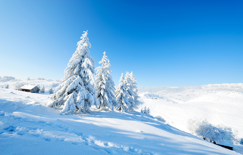 Photo wallpaper Nature, Winter, Snow, Spruce, Landscape