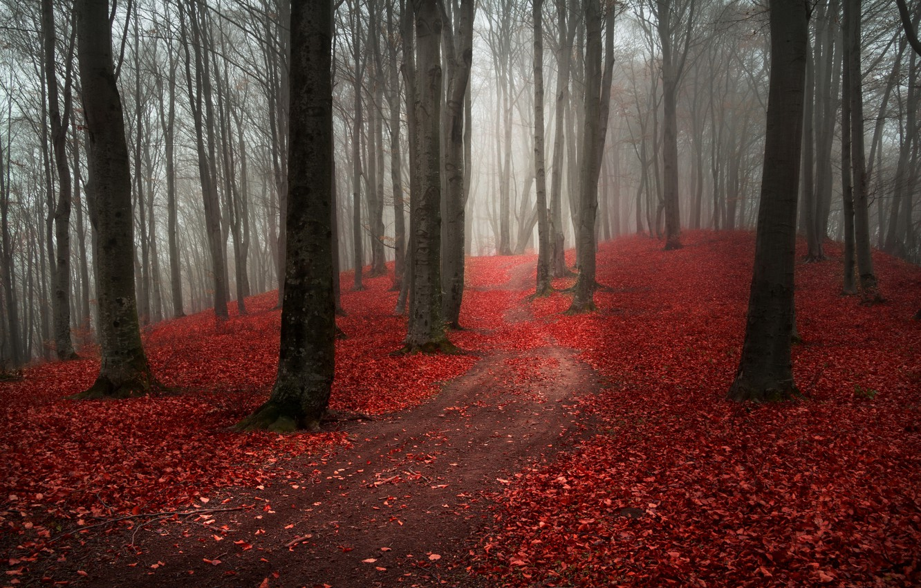 Photo wallpaper road, autumn, forest, leaves, trees, nature, fog, overcast, red, path, Burgundy