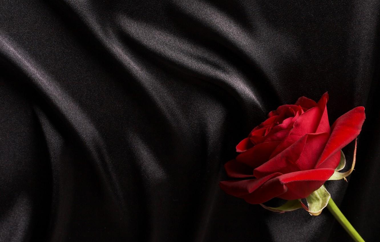 Photo wallpaper red, black, rose, silk, satin