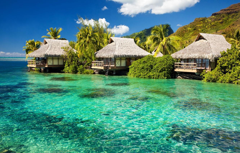 Photo wallpaper greens, palm trees, the ocean, island, Bungalow, Lazur