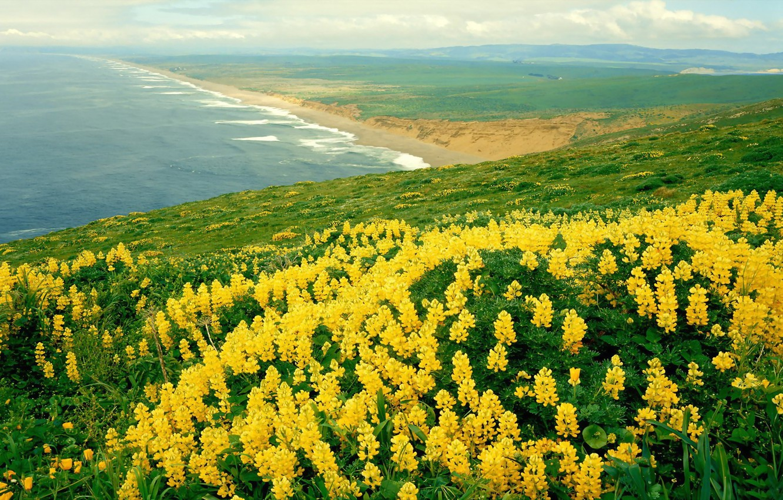 Photo wallpaper sea, flowers, nature, panorama