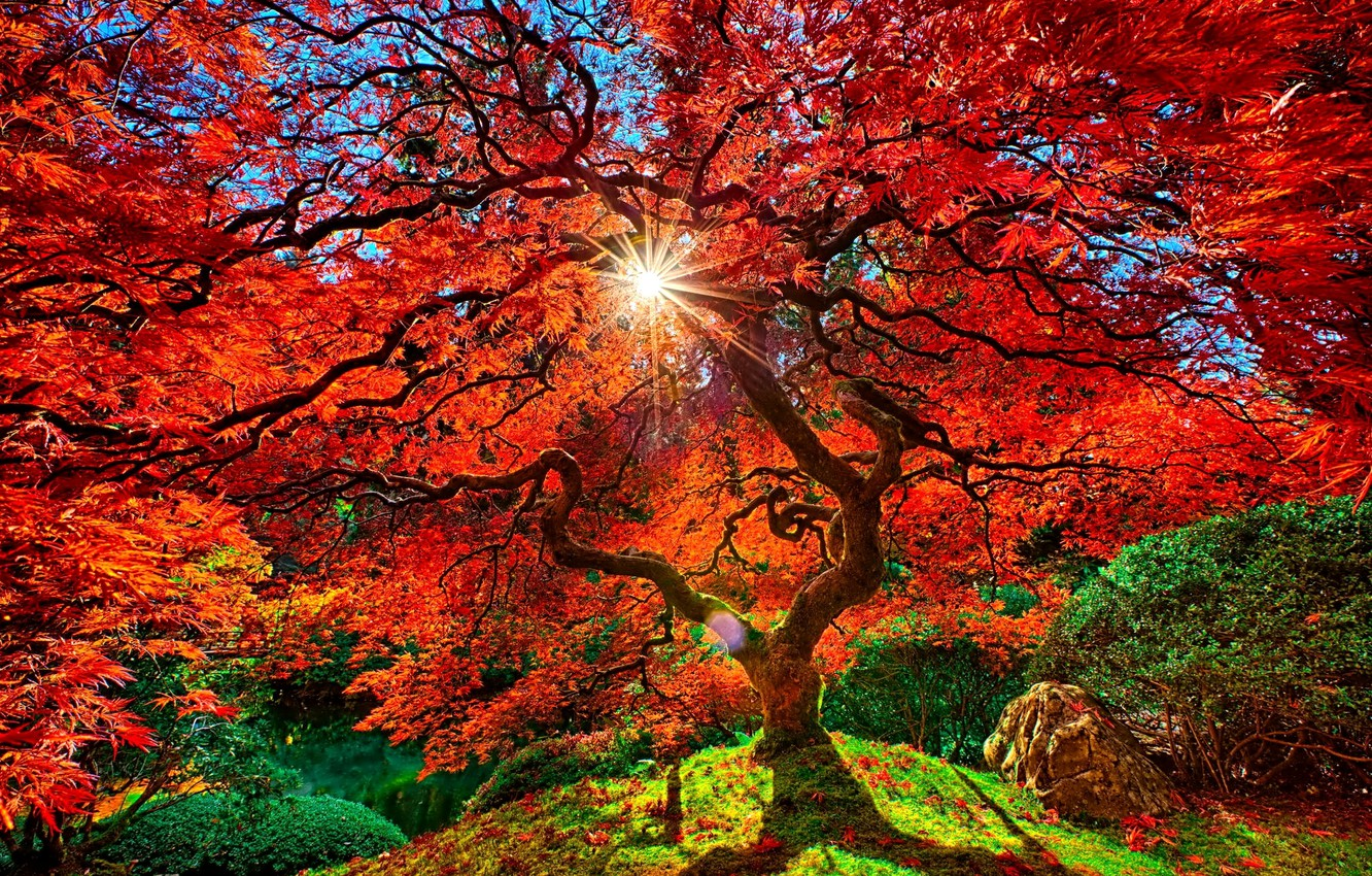 Photo wallpaper the sky, leaves, the sun, branches, tree, Park