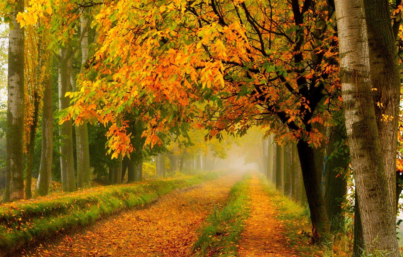 Photo wallpaper road, autumn, forest, leaves, trees, nature, Park, colors, colorful, forest, road, trees, nature, park, autumn, …