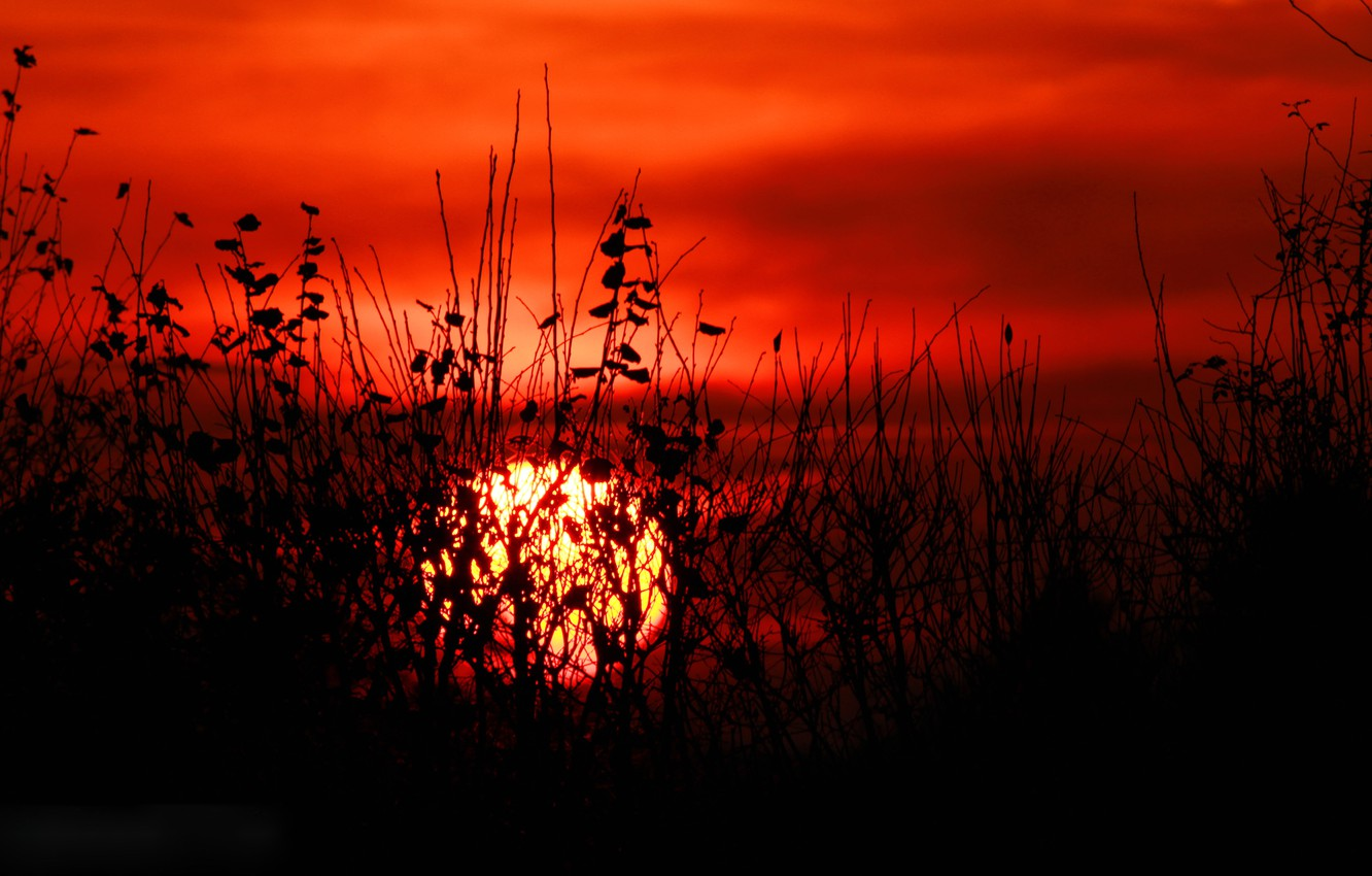 Photo wallpaper the sky, grass, leaves, the sun, clouds, sunset, plant, silhouette, the bushes