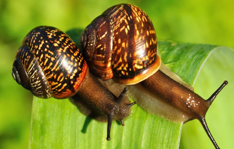Photo wallpaper greens, nature, sheet, two, snails
