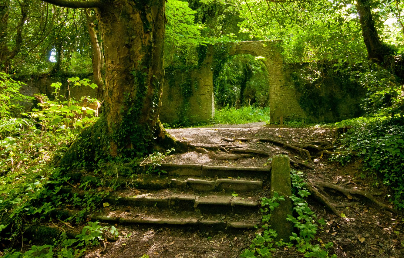 Photo wallpaper forest, summer, the old walls